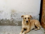 Cassy - Anfang Januar 2009 - Hündin