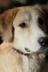 Kasper - 11 Monate Rüde