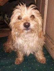 Milo - 1,5 Jahre alter Rüde