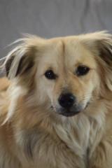 Mimi - 3 jährige Hündin