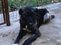 Pia - 2-jährige Hündin
